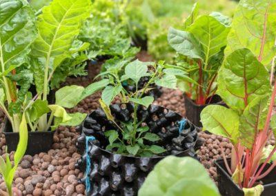 Stadttour Mobilität und Wasser: Pflanzen im Gewächshaus